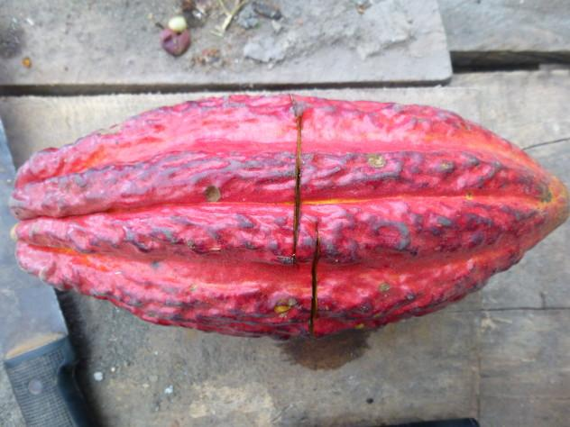 Ecuador Finca 102 632x474 - 19 Cacao Brands To Look Out For In 2019
