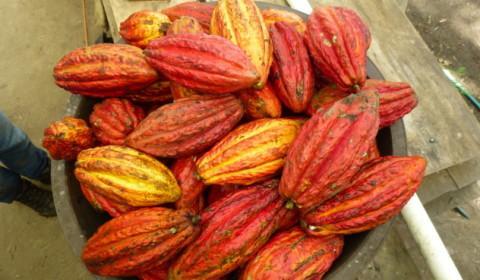 Ecuador Finca 075 632x4741 480x280 - How is Chocolate Made?