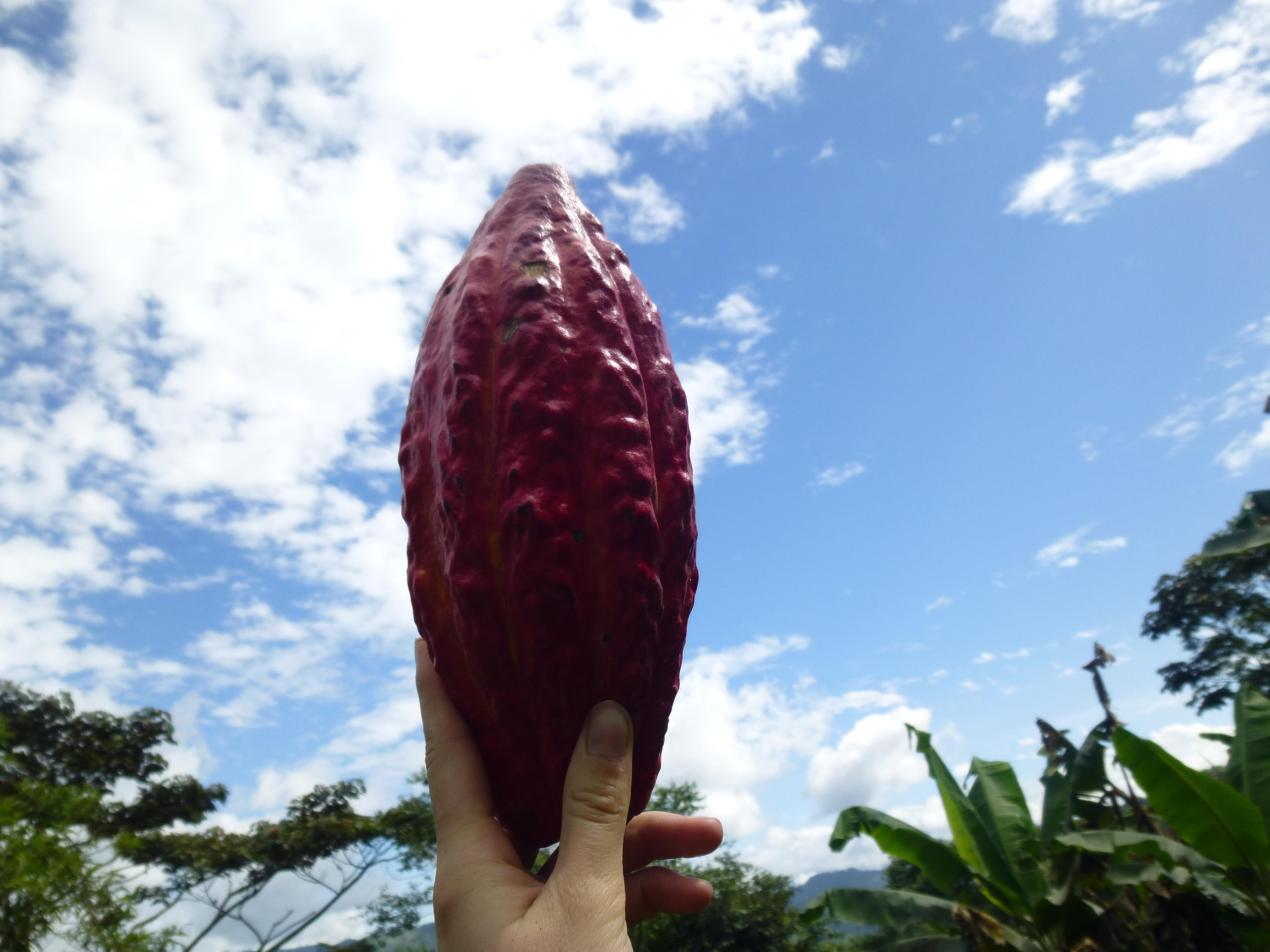 Ecuador Finca 089 - 19 Cacao Brands To Look Out For In 2019