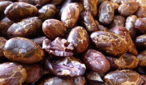 Finca Bars 072 480x280 - How is Chocolate Made?