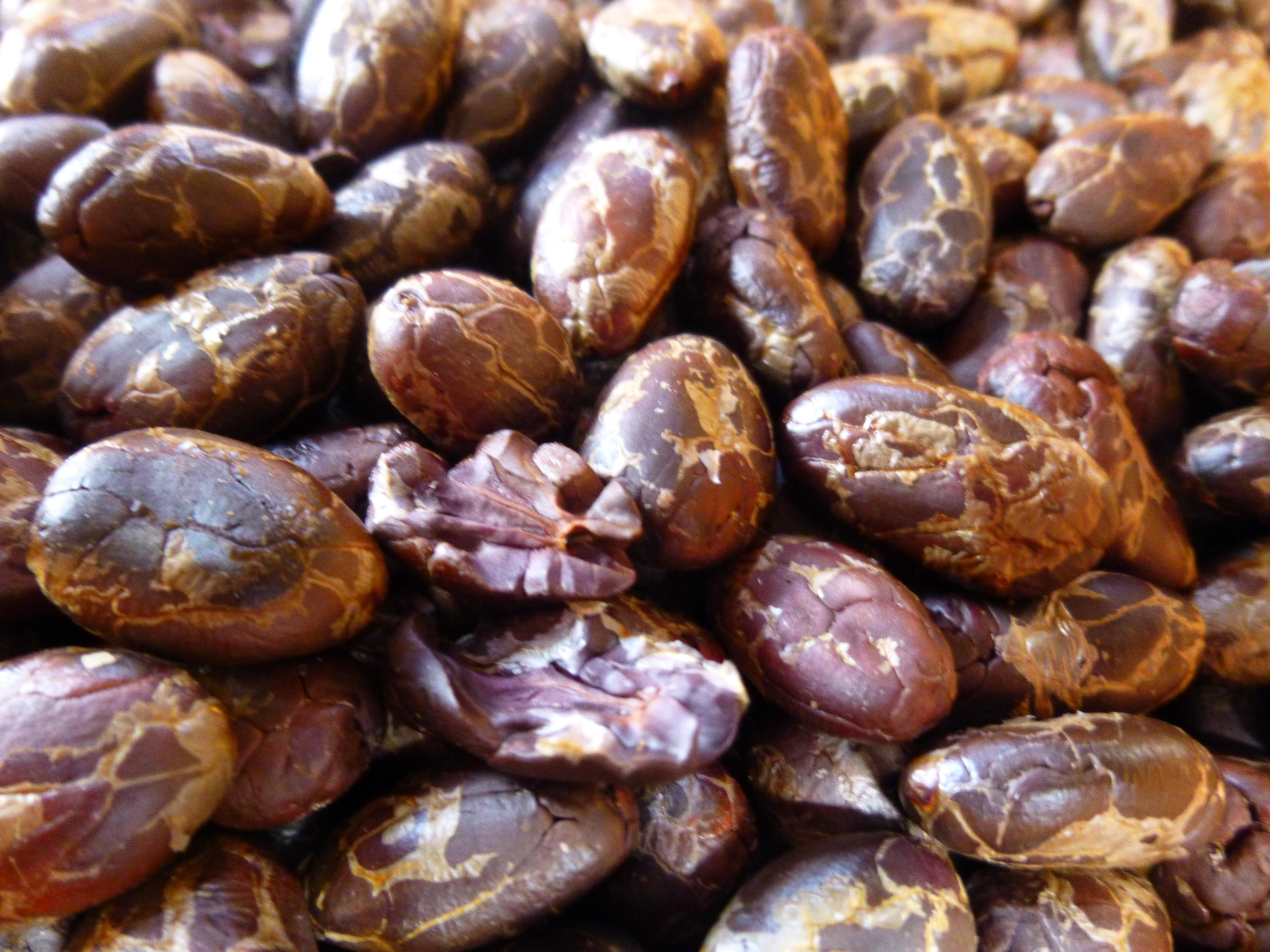 Finca Bars 072 - How is Chocolate Made?