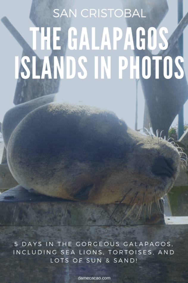 Likely the most beautiful place I've ever seen, San Cristobal Island is truly a paradise, far from the crowds of the Galapagos cruises. From tortoises to sea lions and beaches, it's hard to deny such beauty. Ready to feast with your eyes? | #galapagos #ecuador #san #cristobal #pictures #photos #photography #best #travel #south #america #islands #beautiful #places #wanderlust
