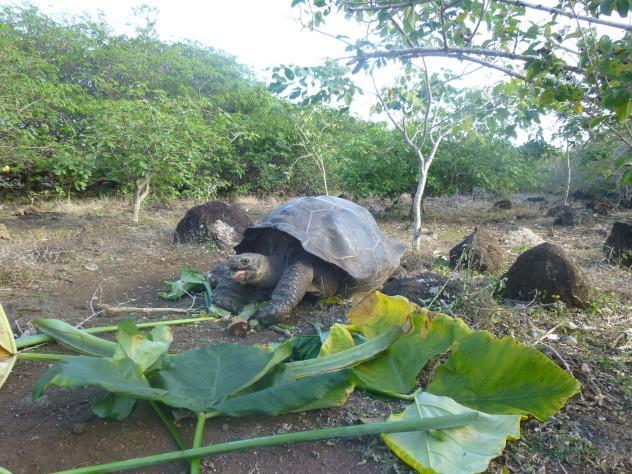 La Galapaguera