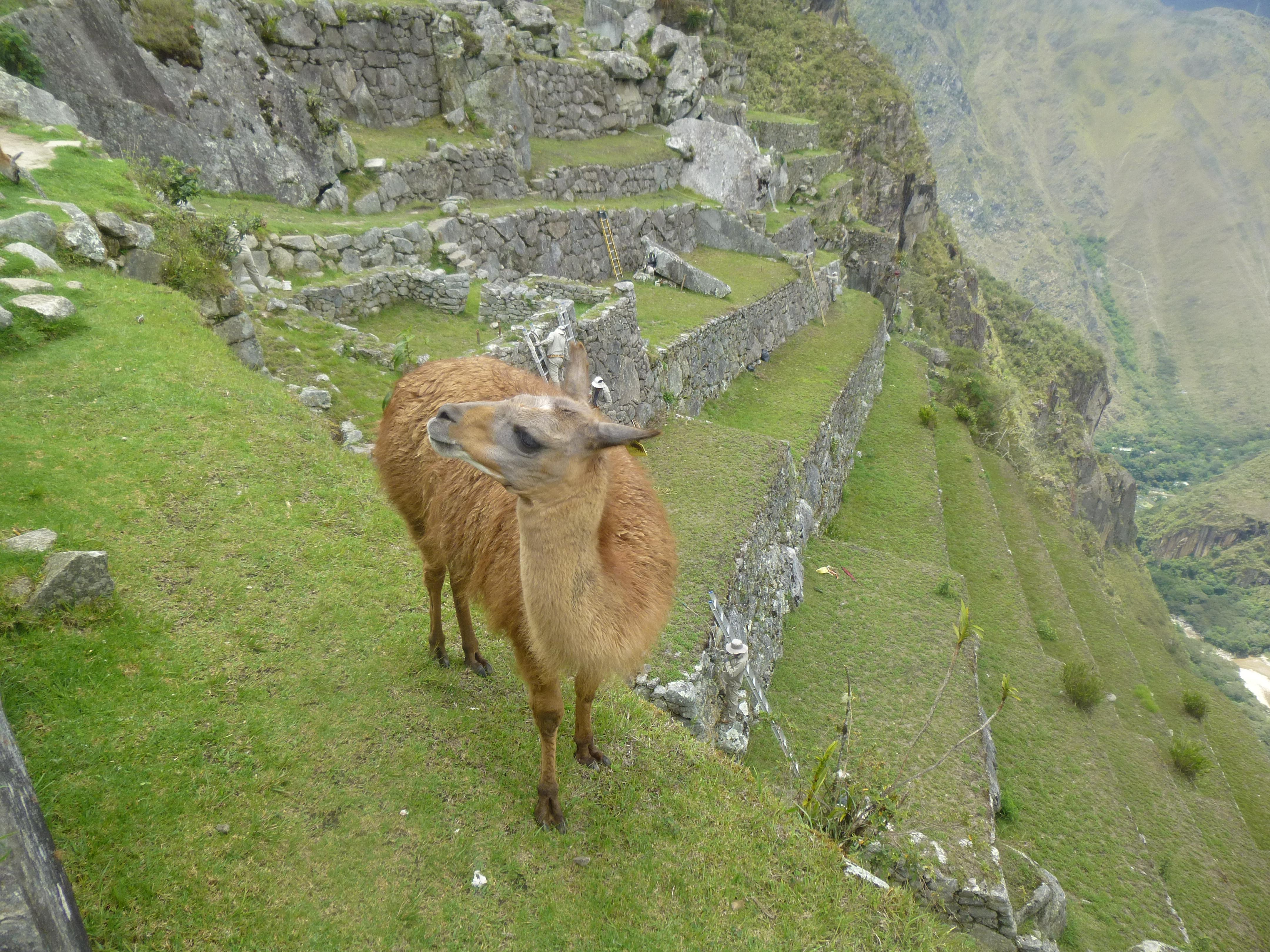 P1030940 - Budget for Volunteering in Rural Peru