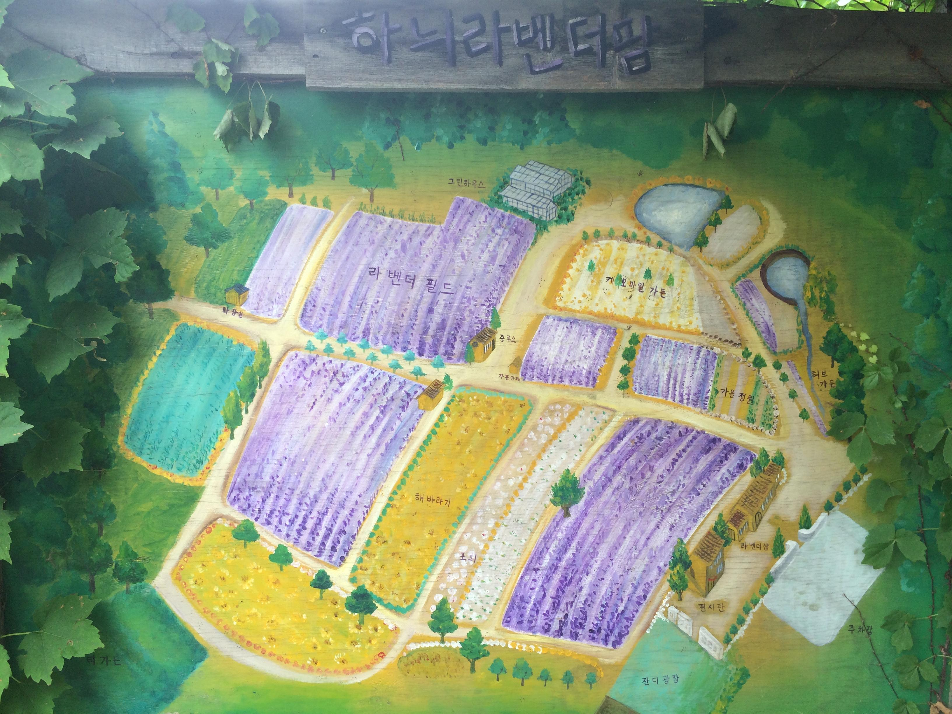Daytrip From Seoul: Hani Lavender Farm (하늬 라벤더 팜)