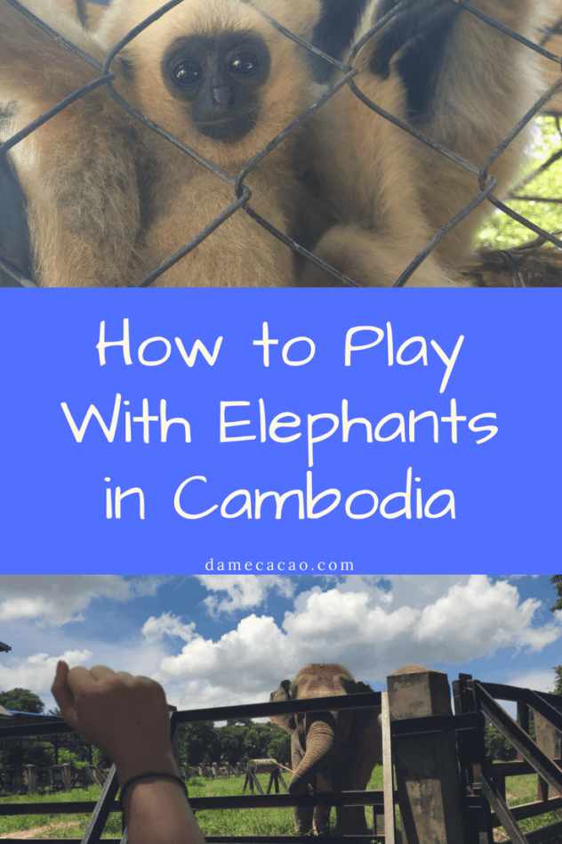 Phnom Tamao Animal Sanctuary just outside of Phnom Pen, Cambodia is the perfect place to spend the day with rescued elephants, monkeys, and deer-- with kids or without!   #phnom #penh #cambodia #wanderlust #travel #southeast #asia #elephants #monkeys #deer #tamao #animal #sanctuary #daytrip #kid #friendly #from #fun #interesting #unique