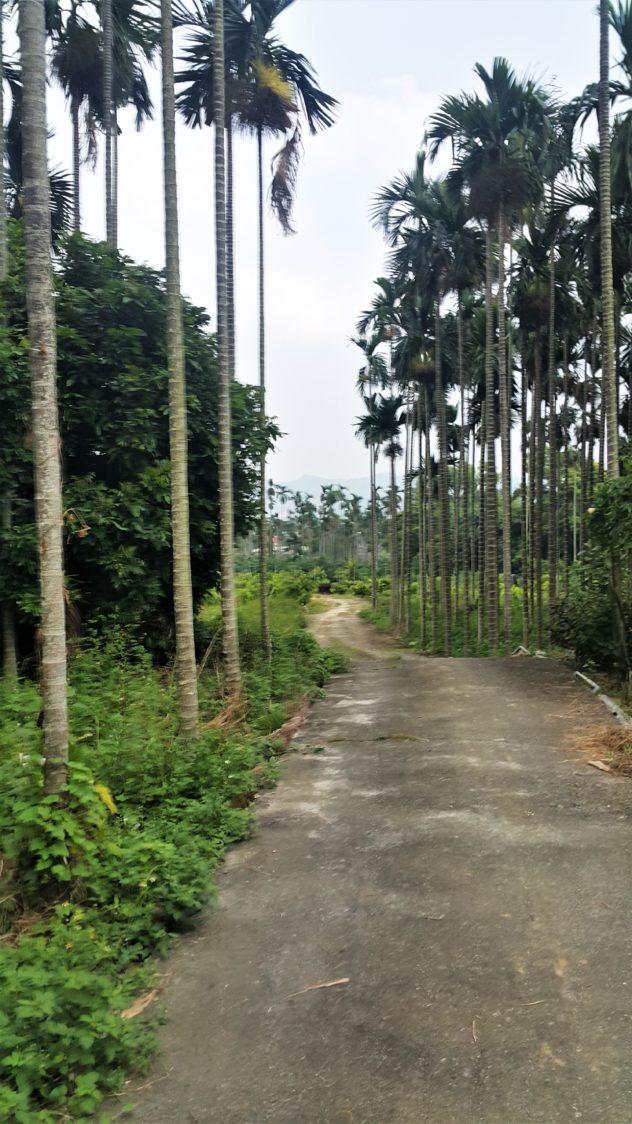 TL Chocolates Taiwan Cacao Farm path