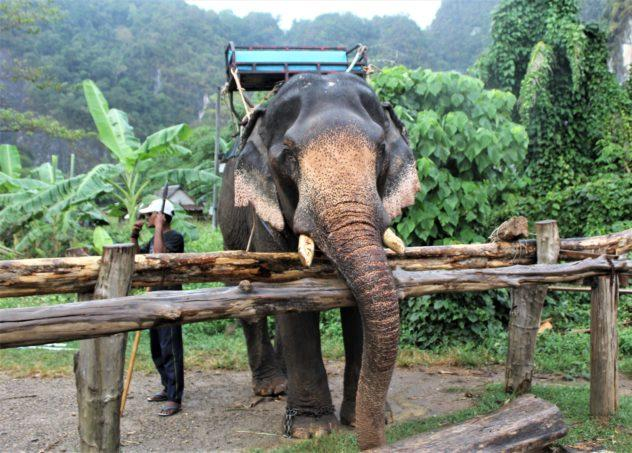 Thep the elephant with his handler, facing away from him and smoking a cigarette, in Krabi, Thailand