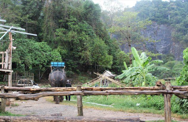 Thep the elephant walking away with his handler in Krabi, Thailand