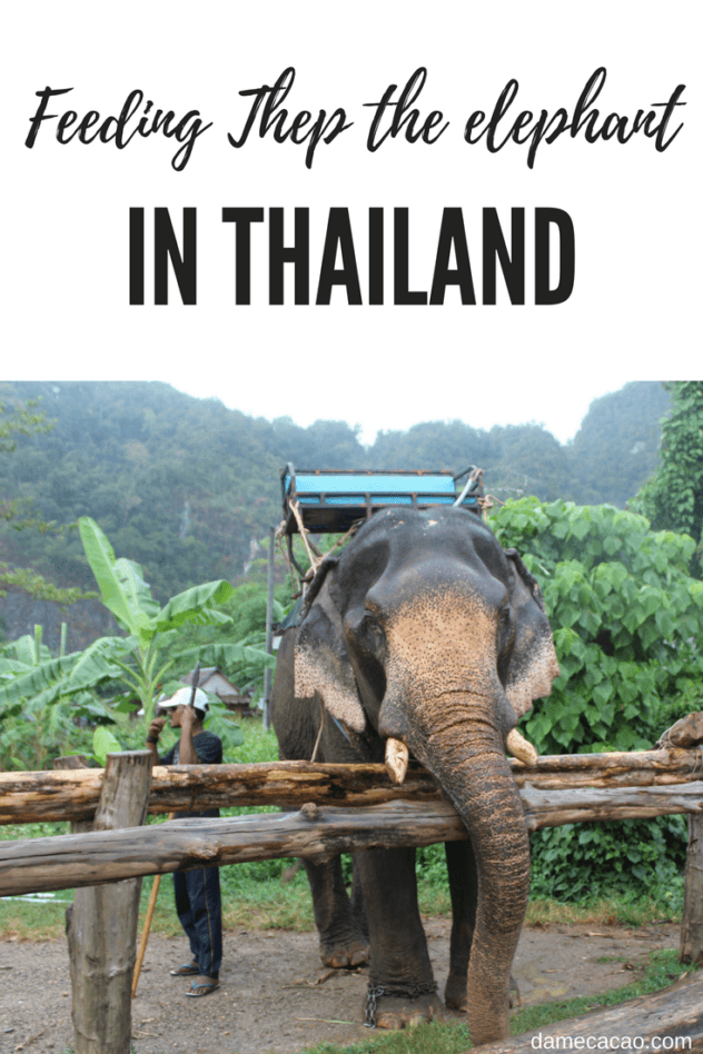 If you don't want to ride an elephant, but you still want to make it happy, what do you do but feed it? Momma taught me right.   #Thailand #travel #krabi #animal #elephant #elephants #ethical #thai #bananas