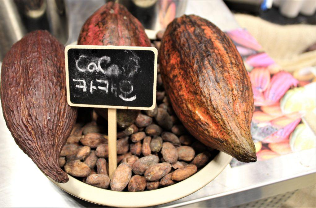 Fresh cacao pods with raw cacao beans