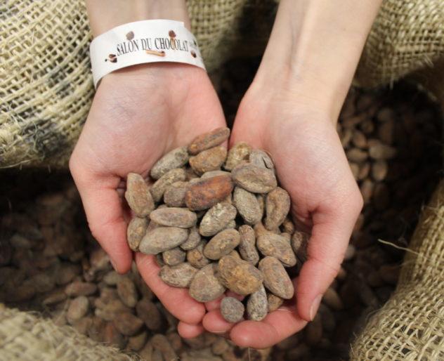 Seoul salon du chocolat 2018: handful of raw Venezuelan cacao bean