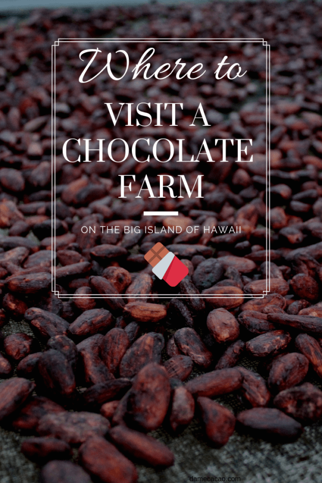 Hawaiian Chocolate: Big Island Cacao Farm Tours & Chocolate Shops pinterest pin with cacao beans