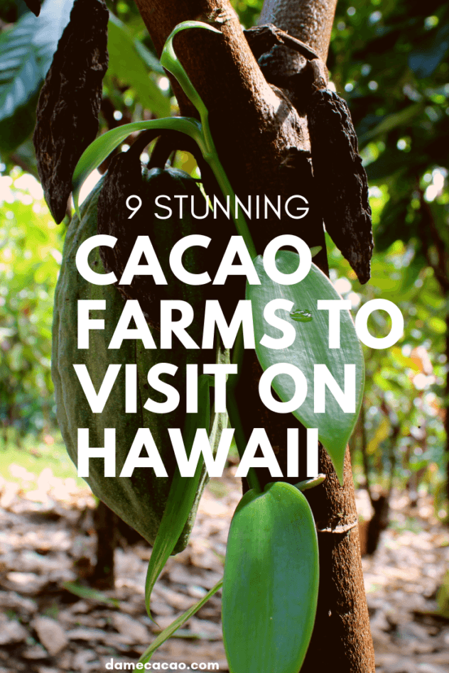 Hawaiian Chocolate: Big Island Cacao Farm Tours & Chocolate Shops pinterest pin with green cacao pod