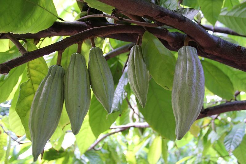 IMG 5277 - Oahu Chocolate Guide: 13 Hawaiian Chocolate Destinations