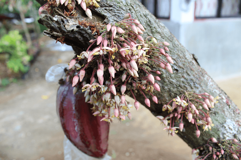 flower bed - March 2019: Learning To Love Durian?