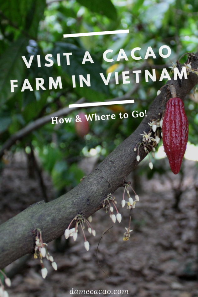 Vietnam cocoa plantation pinterest pin 1