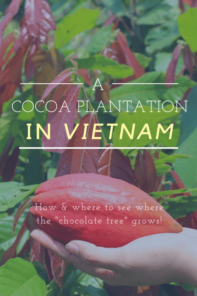 Vietnam cocoa plantation pinterest pin 2