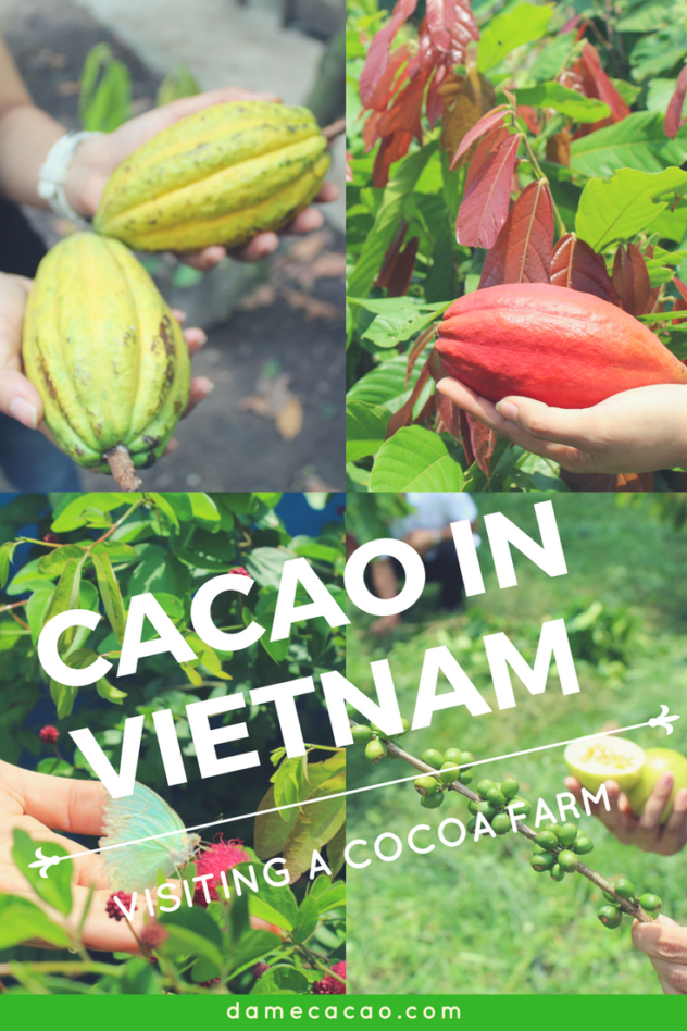 Vietnam cocoa plantation pinterest pin 3