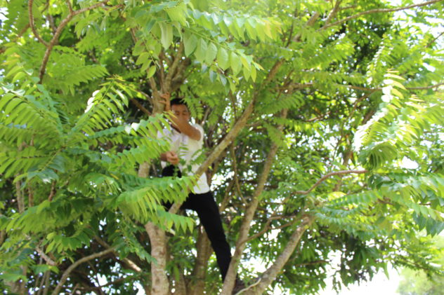 Azzan Vietnam Cocoa Plantation Visit Climbing Tree for Fruit