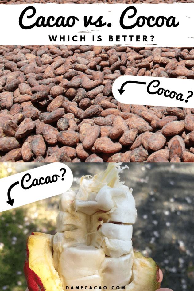 Cacao v Cocoa Pinterest Pin 1